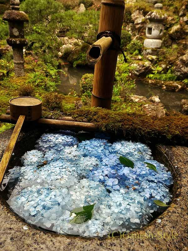長岡京市にある名刹、柳谷観音(楊谷寺)のあじさいの石臼