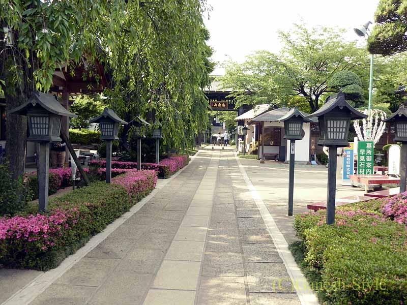 埼玉県川口安行にある桜で有名な古刹、密蔵院の参道