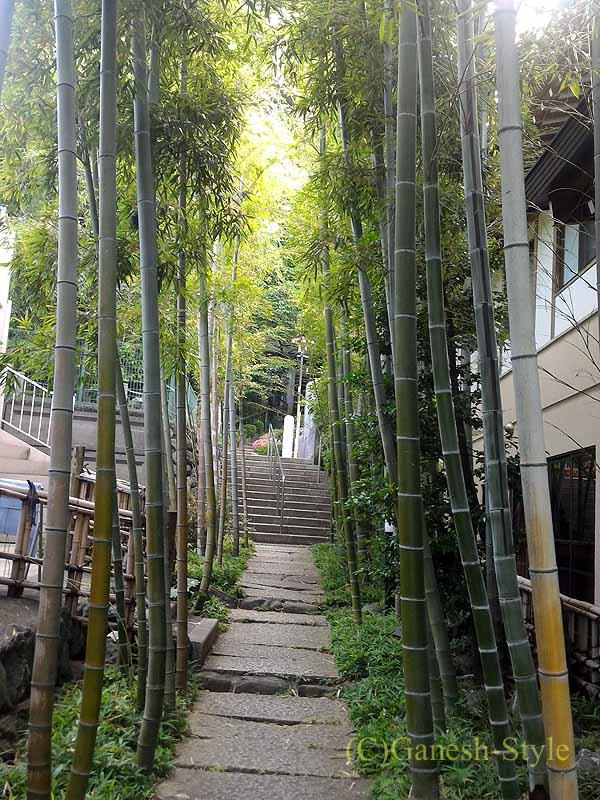 埼玉県川口安行にある桜で有名な古刹、密蔵院の竹の小径