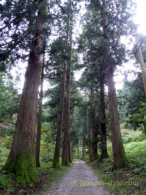 新潟県五泉市にある曹洞宗の古刹、滝谷慈光寺の参道