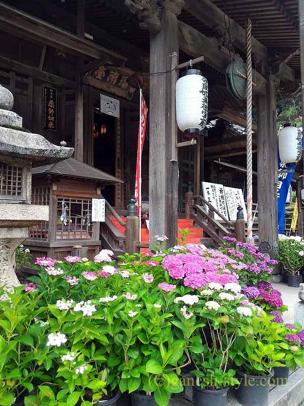 高野山にある日本最古の眼病平癒所、釜滝薬師金剛寺の本堂前の花